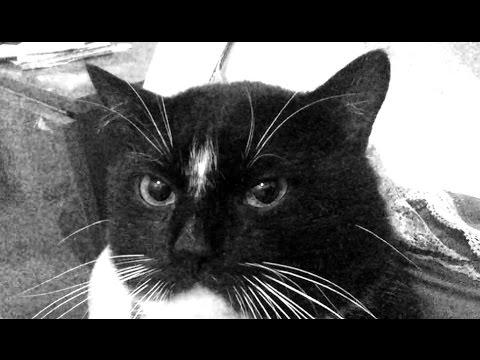 Проучить кота