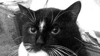 Как проучить кота сыкуна (Кот в памперсе)