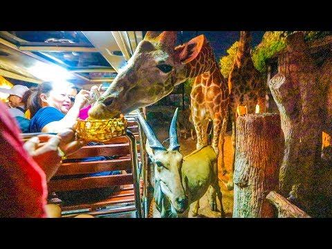 FEEDING 50 GIRAFFES! + many more animals!