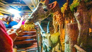 FEEDING 50 GIRAFFES! + many more animals!