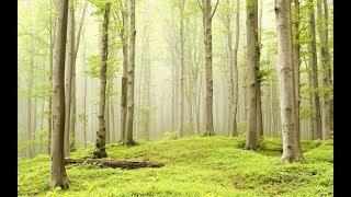Леший похитил ребёнка в Муромском лесу ( ЖУТКАЯ ИСТОРИЯ )