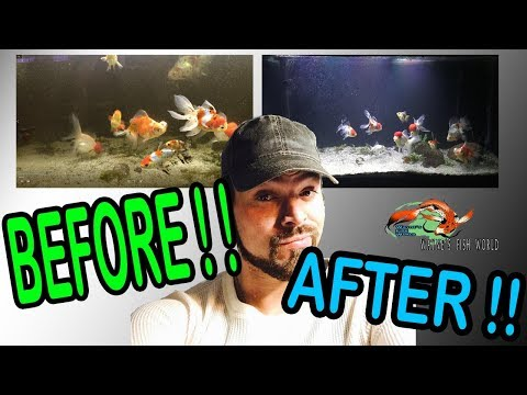 DEEP CLEANING Goldfish Tank From SWAMP To CLEAR WATER