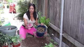How to Use Mulch With Planted Seeds : The Chef's Garden