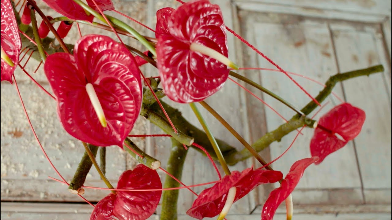A Red Anthurium Arrangement Flower Factor Tutorial Powered By
