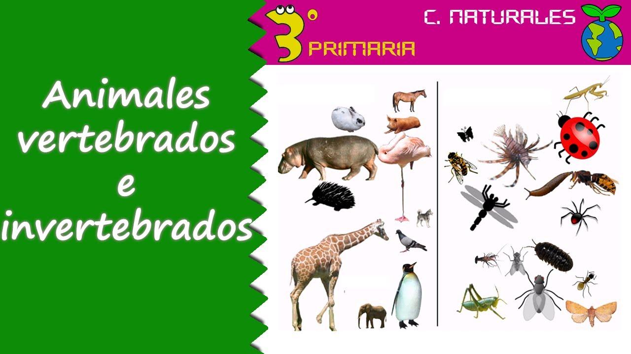 Ciencias de la Naturaleza 3 Primaria Tema 5 Animales