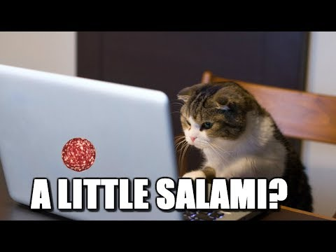 Cats Can Have a Little Salami
