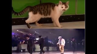 This cat can do moonwalk! | Cute and Funny Animals