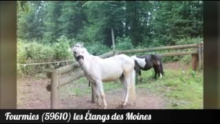 Fourmies (59610) les Étangs Des Moines
