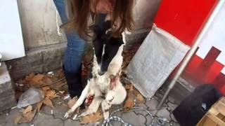 Московский рынок-собака,сильно травмирована передняя правая лапа.