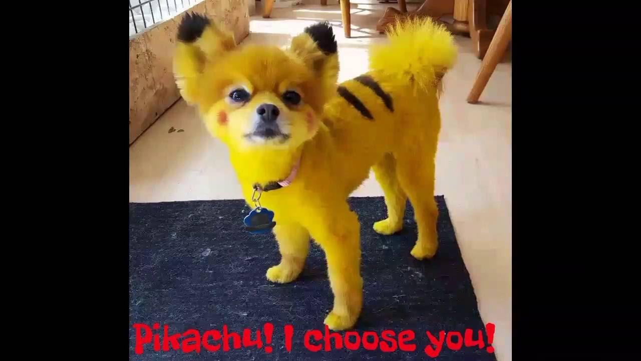 Pomeranian That Looks Like A Cat