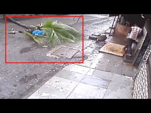 On cam: Woman passes away after tree falls on her in Mumbai
