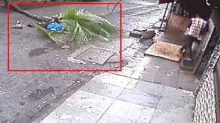 On cam: Woman dies after tree falls on her in Mumbai