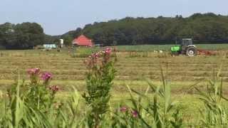 Camping De Waps, Gaasterland (Friesland): rustiek kamperen in sfeervol en bosrijk Gaasterland