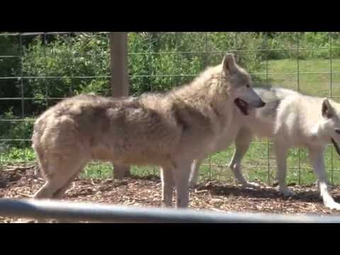 Pets4You - Southern Ohio Wolf Sanctuary