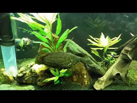 Quick Tip For Cleaning Algae From Your Aquarium Glass