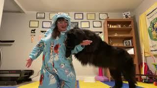 Dancing Bear! Trick Dog Training! | Newfoundland Dog