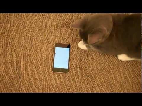Telefonla Oynayan Kedi