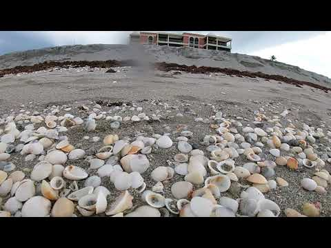 Sea Shell Beach West Palm Beach Florida June 2020 from YouTube · Duration:  3 minutes 52 seconds