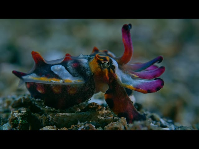 Sulawesi Splendour II
