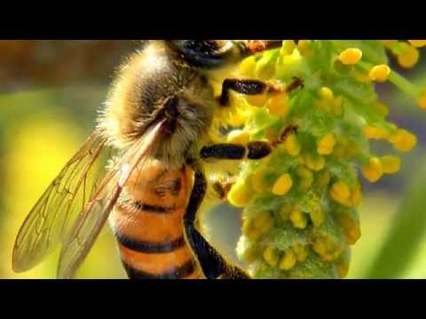 Wasp Facts: 25 Facts about Wasps