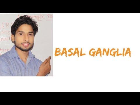 Basal Ganglia in Hindi