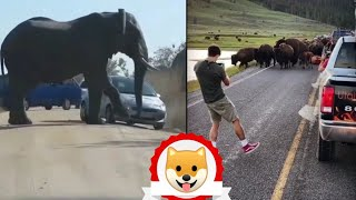 🐼 Awesome Funny Animals'Life Videos 🤣 Try Not To Laugh Watching Funny Animals Compilation #5