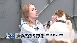 """Новости Псков 28.05.2018 # """"Шанс"""" объявила сбор средств на лекарства для бездомных животных"""