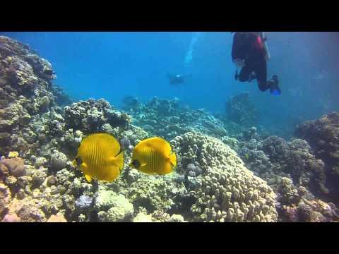 Im Zaubergarten der Korallen: Wracks am Südsinai 2/3из YouTube · Длительность: 14 мин47 с