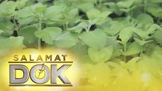 Salamat Dok: Health benefits of Oregano