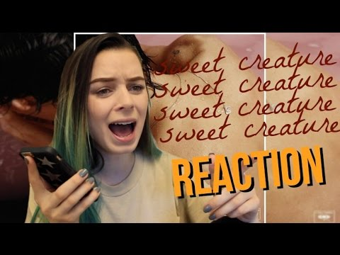 HARRY STYLES SWEET CREATURE REACTION