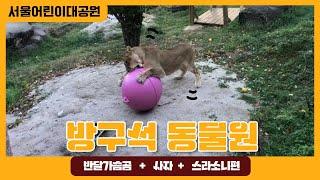 서울어린이대공원 방구석 동물원(반달가슴곰, 사자, 스라소니편)썸네일