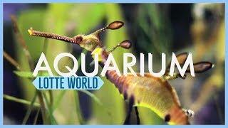 Lotte World Aquarium - A Beaut…