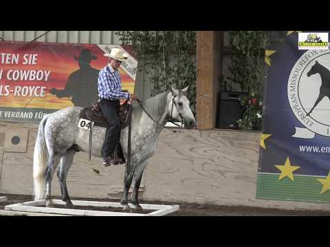 Velvet´s Moontracker, Missouri Fox Trotter a Champion in Performance and Versatiliy