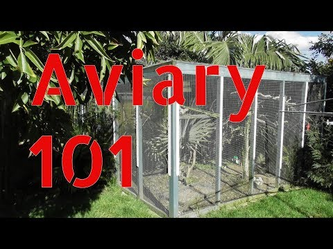 Outdoor Aviary 101 | Tips On Building A Large Aviary Outdoors