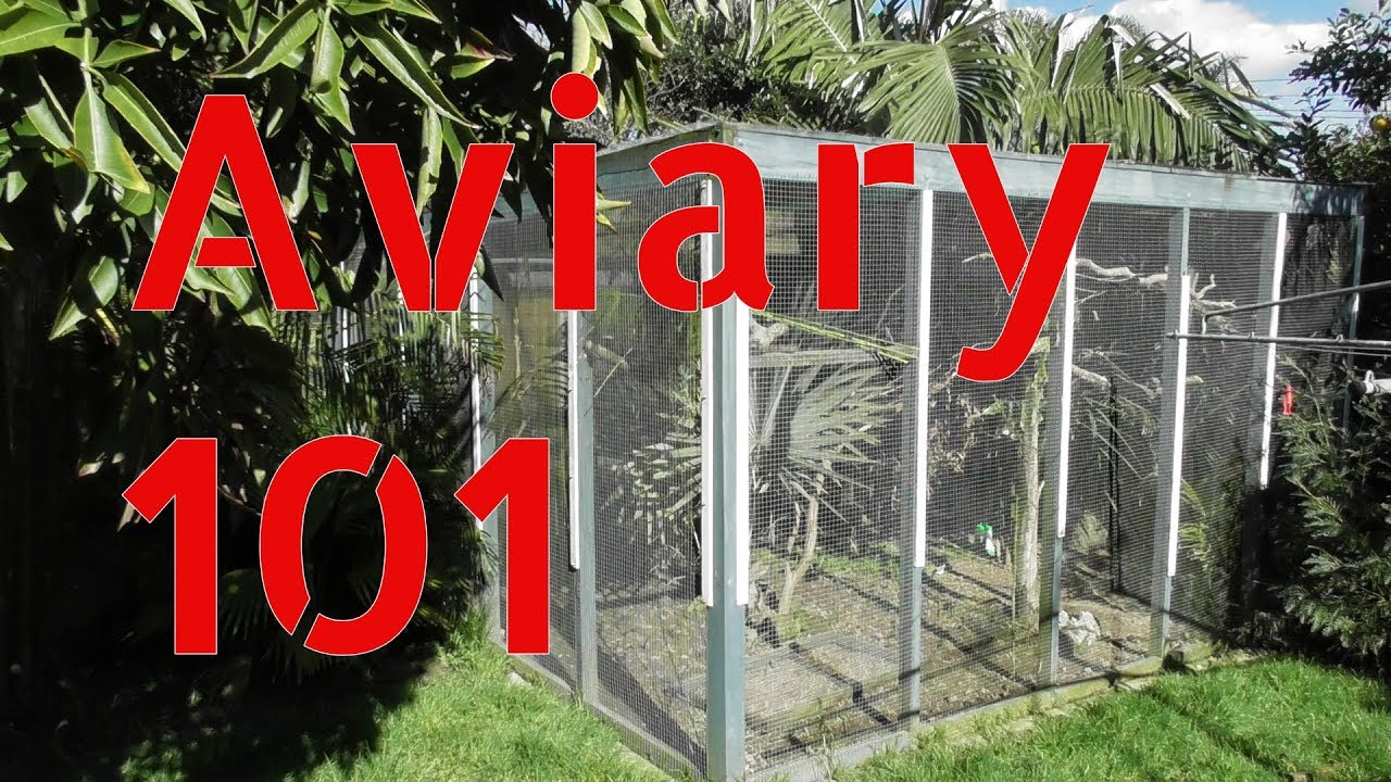 Outdoor Aviary 101 Tips On Building A Large Aviary Outdoors Youtube