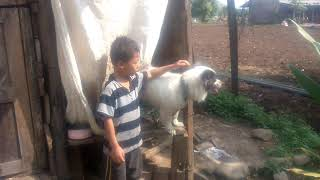 Funny video of dog