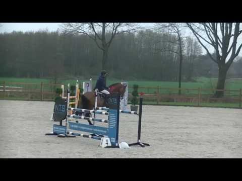 Zambesi (heartbreaker) x Verdi x Burggraaf 4 years old Zangersheide approved stallion his first show