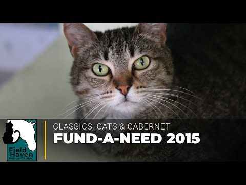 Classics, Cats and Cabernet 2015 Fund-A-Need Video || FieldHaven Feline Center