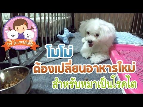 โมโม่กับอาหารใหม่สำหรับหมาเป็นโรคไต