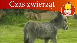 Czas zwierząt - Osioł + Paw, dla dzieci Luli TV - Videos for babies