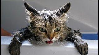 Как избавится от глистов у котенка в домашних условиях? Часть 4