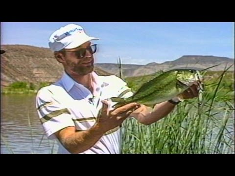 Flipping Waterdogs With Steve Penfield