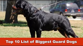 Top 10 Biggest Guard Dogs