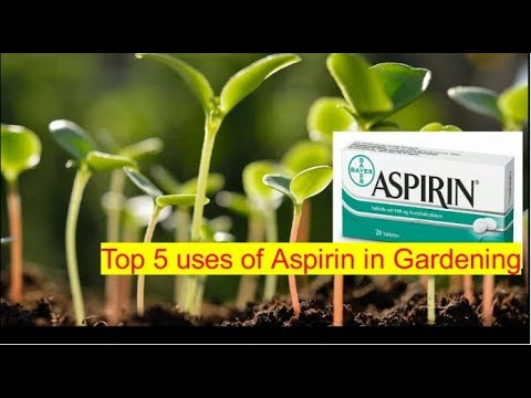 Top 5 Aspirin uses for smart gardening!! from YouTube · Duration:  1 minutes 50 seconds
