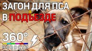Москвичка держит собаку на лестничной клетке