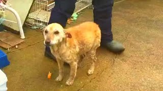 This Dog Was Left To Die At A Vets   But Then They Realized What He Needed To Pull Through