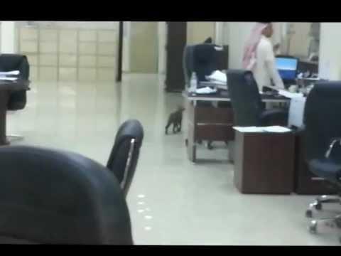 السعودية : قطو يعمل بوظيفة مشرف في مكتب العمل بالرياض مكتب الاستقدام