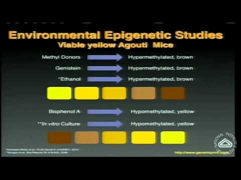 Epigenetics: How Genes and Environment Interact