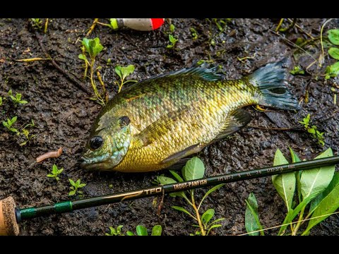 Temple Fork Trout-Panfish Rods With Bill Sherck | TFO