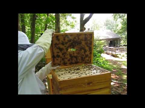 Checking Honey supers and adding new inner covers 7/4/17